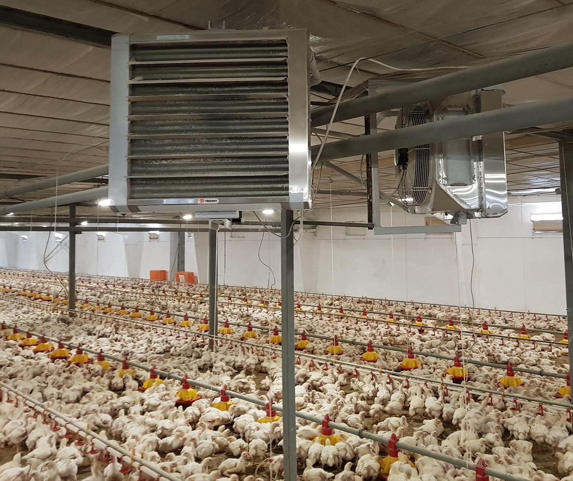Современное отопление птицефермы