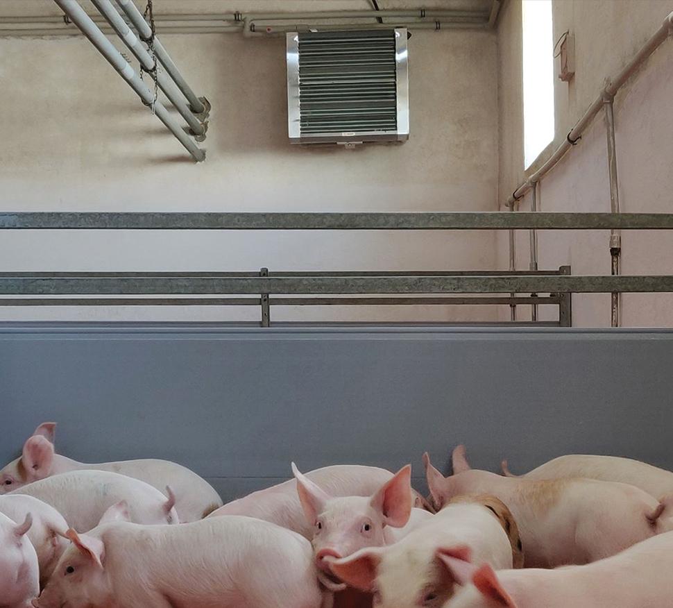 Современное отопление свинокомплекса