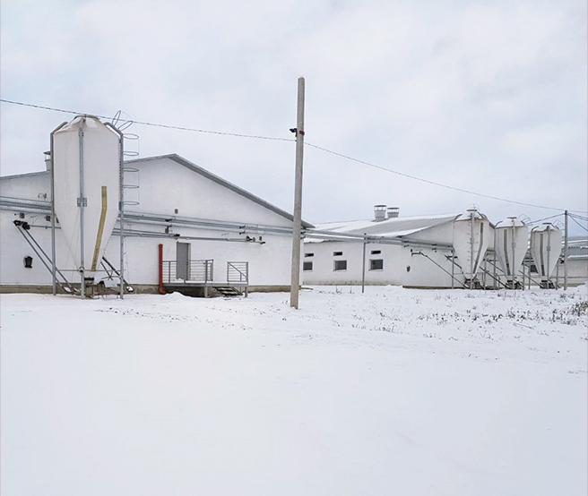 Nowoczesne ogrzewanie kompleksu hodowli trzody chlewnej