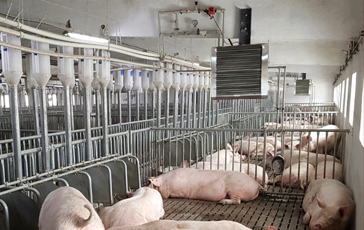 Modern heating of a pig farm